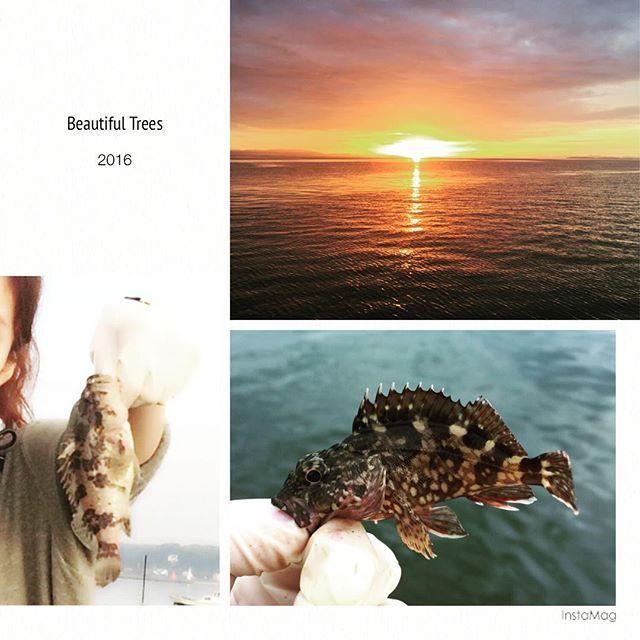 【15natsuki】さんのInstagramをピンしています。 《夜釣り🎣🌙 暑くもなく寒くもなく快適でした(*´ω`*) 夜釣りって初めて行ったけど、朝日がこんなに綺麗に見れるなんて感動✨ #夜10時から朝8時までw #メバル #親指がギリギリ入る可愛いのから #煮付けレベルまで #大漁🐟 #海、ありがとう #手袋付けるの邪道だけど #1人で餌付けと魚外す為.. #しょうがないよね..💭 ( ̄▽ ̄)》