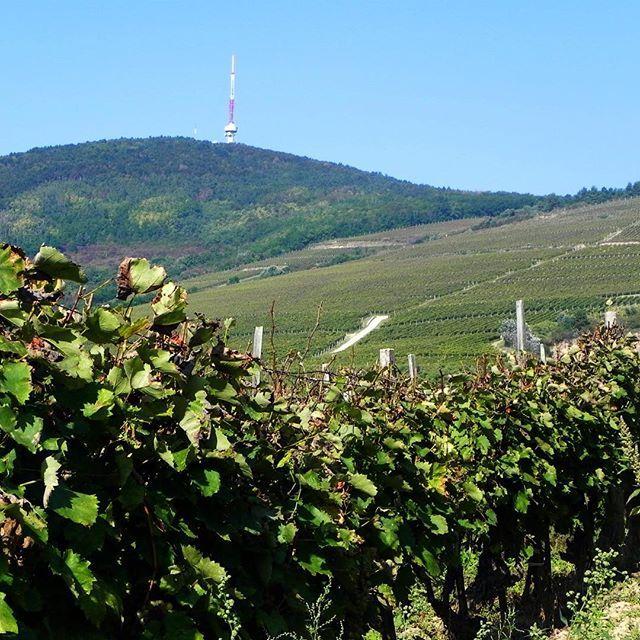 #tokaj #tvtower #vineyard #tokajwineregion #loves_hungary