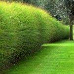 Réussir un beau jardin sans entretien, c'est le rêve d'un grand nombre de jardiniers. Ce décor soigné aux lignes contemporaines en est un bel exemp