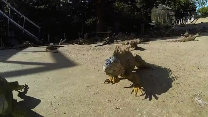 the iguana farm, full video - https://youtu.be/Uf9UMTXH4NM