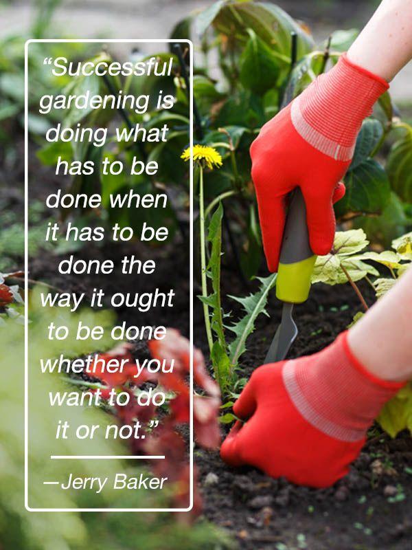 Flowering Wisdom Dengan Gambar