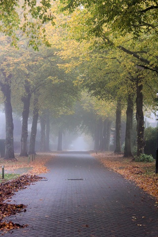 Nature in Bergen, Netherlands (autumn lindenlaan street trees) - a photo by eFFe