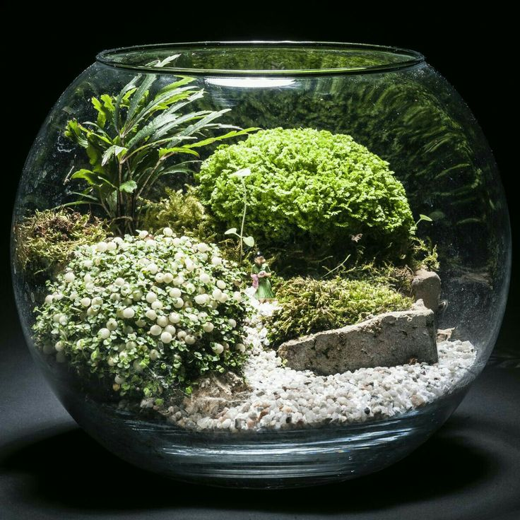 25 creative marimo moss ball ideas to discover and try on. Black Bedroom Furniture Sets. Home Design Ideas