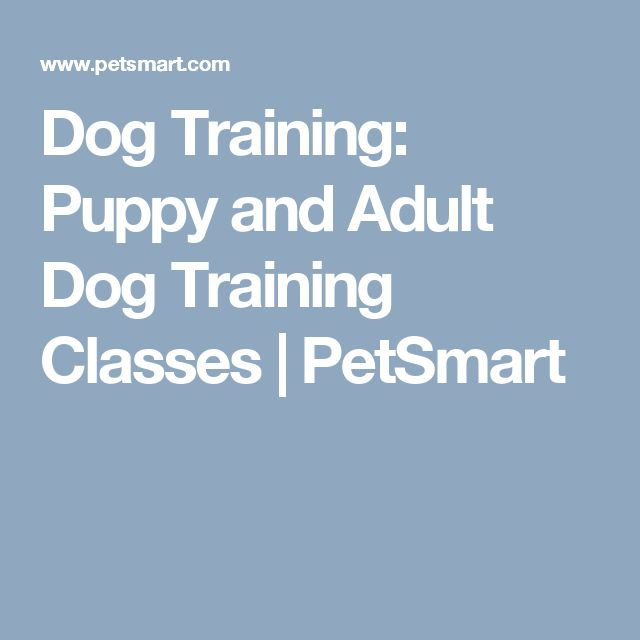 Dog Training: Puppy and Adult Dog Training Classes | PetSmart