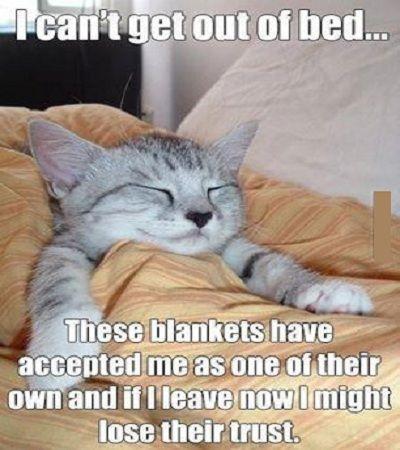 Funny Cat #Leave, #Trust