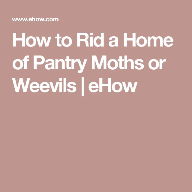 25 Best Ideas About Pantry Moths On Pinterest Moth