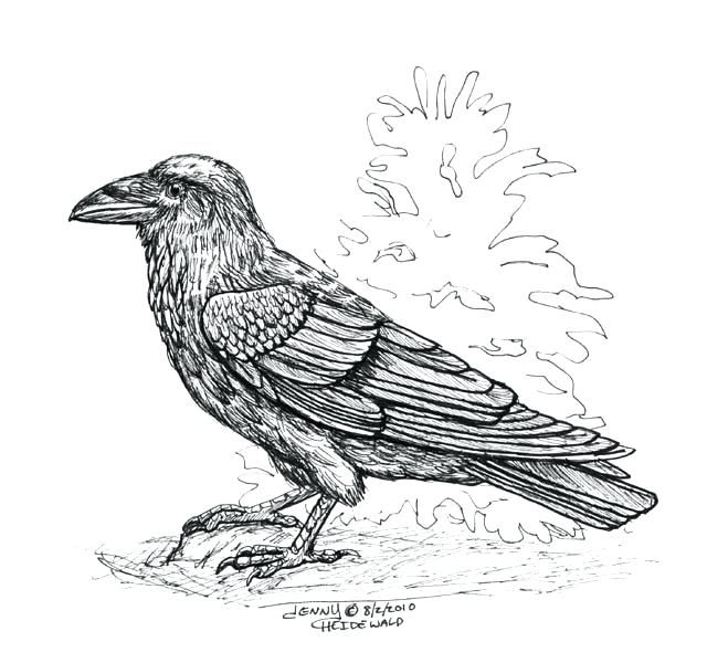 Raven Coloring Page Pin Drawn Raven Crow Beak 1 Raven Coloring