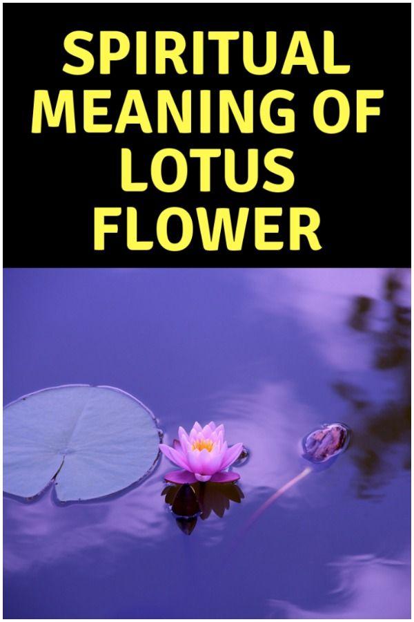 Lotus Flower In Buddhism Symbol Of Enlightenment Spirituality