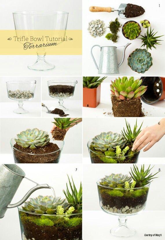 Trifle Bowl Terrarium Tutorial