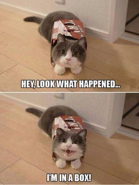 Cat Remix Funny Video Lady Hookup