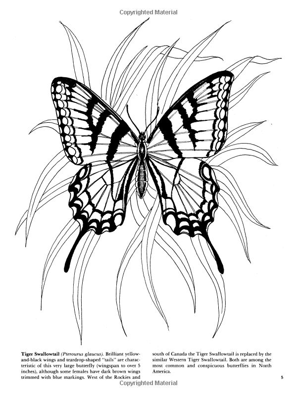 Butterflies Coloring Book Dover Nature Coloring Book Jan Sovak 9780486273358 Amazon