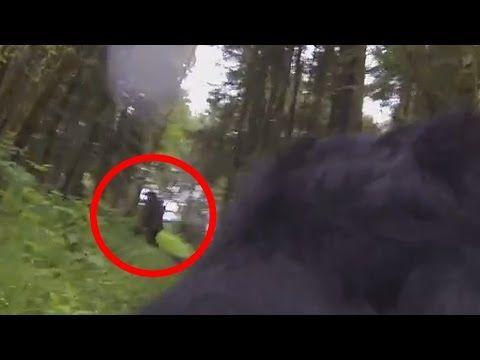 GoPro dog captures Bigfoot on camera   Freak Lore