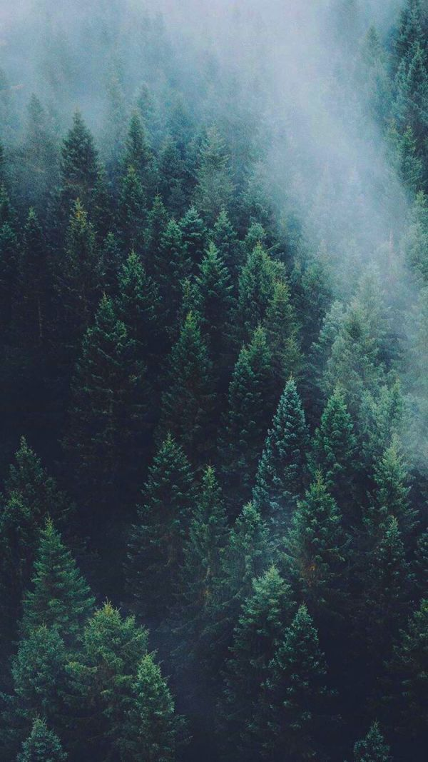 Adorable Aesthetic Forest Wallpaper Forest Wallpaper Forest Wallpaper Iphone Nature Photography Iphone wallpaper green forest