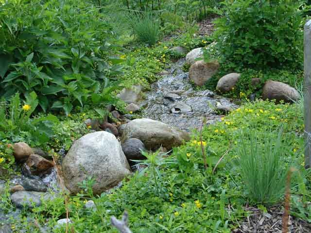 Plants grow over the thin edges of this stream. Rock and roll cover