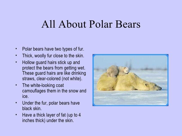Polar Bear on Lesson Plans Preschool Winter Animals