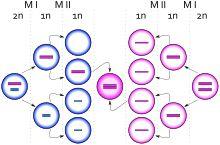 Triple X syndrome - Wikipedia, the free encyclopedia