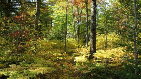 wallpapers de bosques (hd)