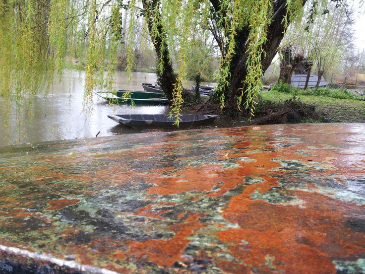 Promenade en barque dans le Marais Poitevin