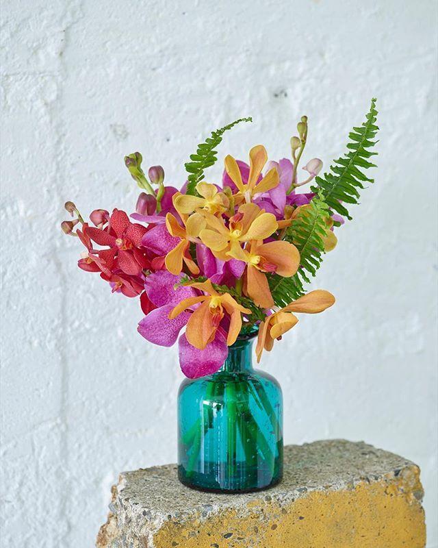過ごしやすい日が続いていますが花は夏モードで。カラフルなモカラをブルーのボトルにいけると一気にバケーション気分が上がります。ランの花を撮影したら#蘭フォト #青山フラワーマーケット のハッシュタグを付けて投稿してくださいね。フォトコンテスト開催中です。#青山フラワーマーケット#フラワー#蘭フォト#蘭#モカラ#花のある暮らし #aoyamaflowermarket #flower #orchid #mokara