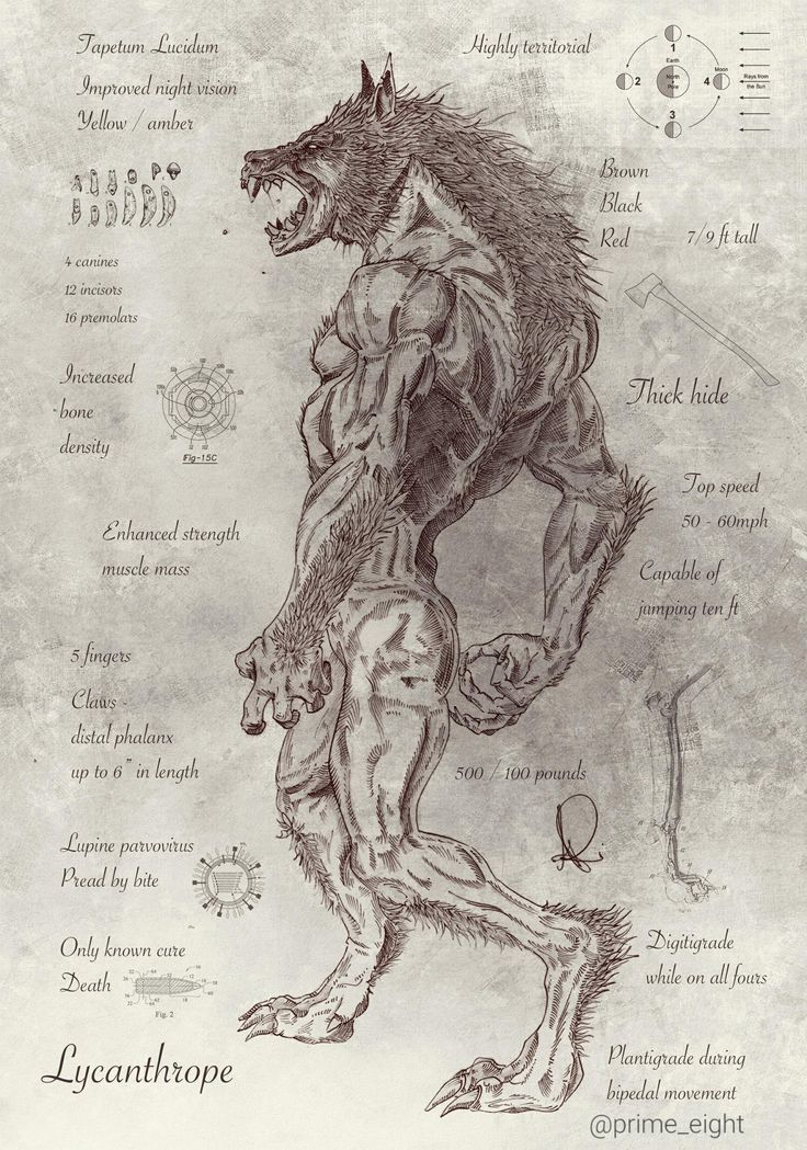 Lycanthrope - Werewolf. Berserkers may have been the inspiration for werewolves, because the fighters wore pelts into battle and fought like fierce animals.