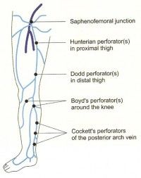 Perforator Veins of lower extremity