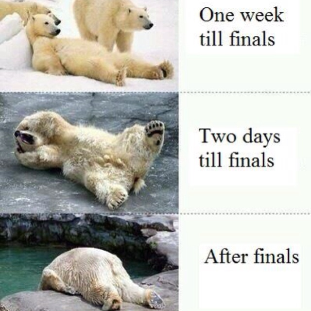 I'm ready to be polar bear # 3: Colleges Life, Polar Bears, Schools, Finals Week, Polarbear, Funny, So True, Finalsweek, True Stories