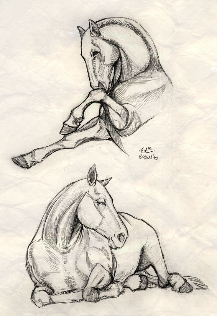 I Like The Contrasts Of These Two Drawings Put Together I Would Like To Try  This How To Draw Horseshorse