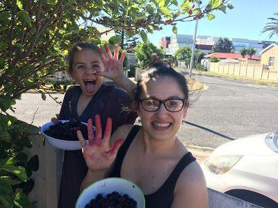 Tara's Blog : Mulberry Jam recipe
