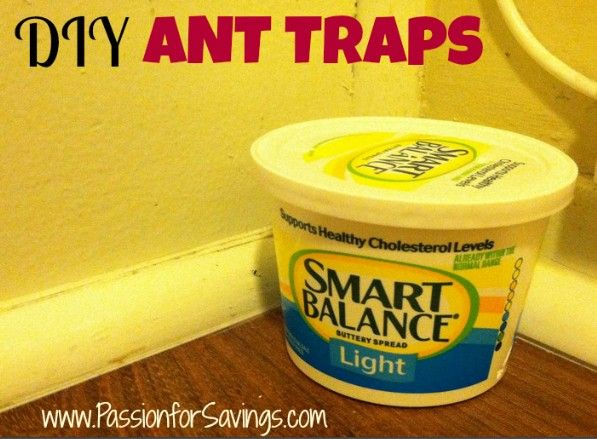 DIY Ant Traps   How to get rid of Ants in the Summer What you Need:  –Boric Acid  –Sugar  –Old, plastic containers  –hammer and nail or something else to poke holes in plastic container