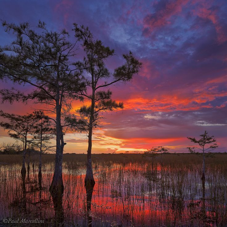 Everglades, Florida, USA (by Paul Marcellini)