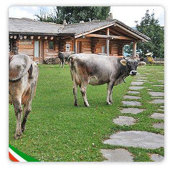 Benvenuti nel portale istituzionale dell'agriturismo Italiano | I valori fondamentali dell'agriturismo italiano