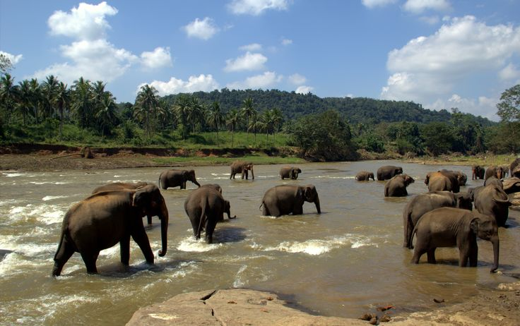 Pinalawella Elephant bathing