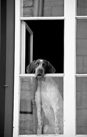 How Much Is That Doggie In The Window  by Melissa Anderson
