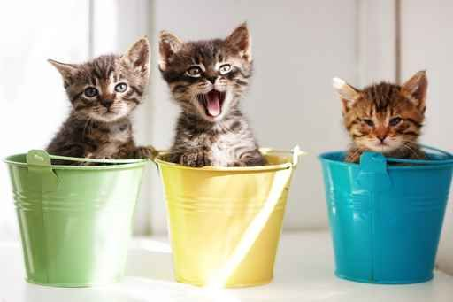 Ahh the kittens. Perfect wallpaper for placing in the laundry room. www.wallpaper24.co.uk