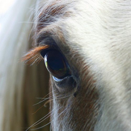 Nothing like looking into the eye of a horse, and knowing they can see your soul.