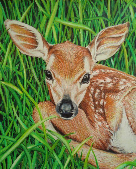Original Baby Deer Art Green Animal Drawing Colored Pencil Etsy Baby Animal Drawings Baby Deer Art Animal Drawings