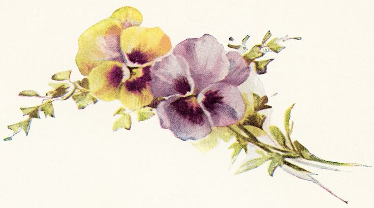 Old Design Shop ~ free digital image: vintage pansies #2