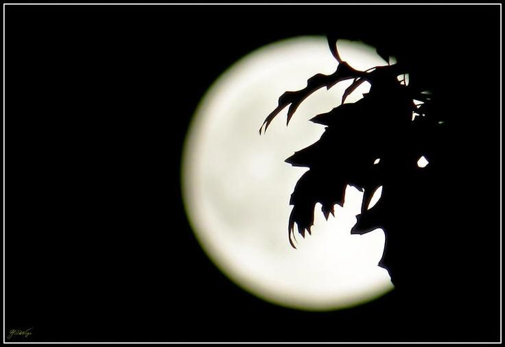Foglie di Luna by Tiziana Orru' @ http://adoroletuefoto.it