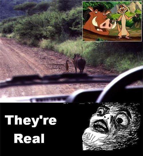 Best Lion King Memes