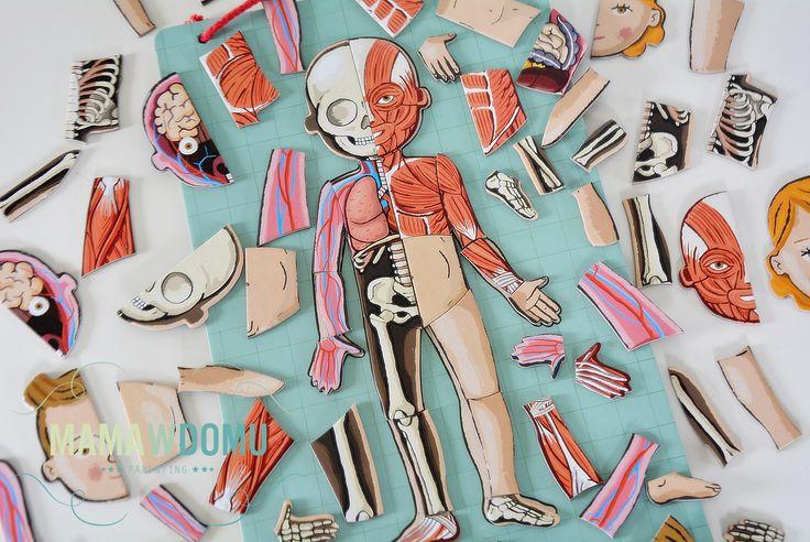 części ciała puzzle