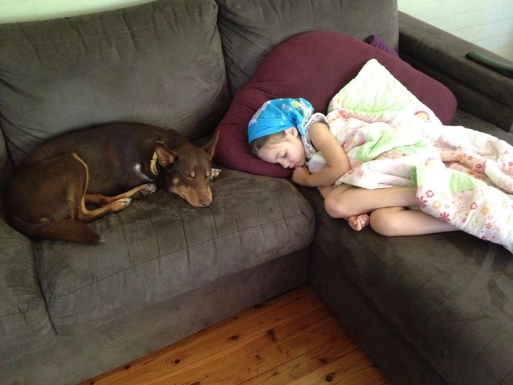 When our little girl was sick, Charlie never left our daughters side. This is where the loving loyal companion shines, kelpies are truly amazing animals.