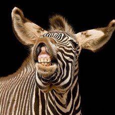 Приколы про животных #приколы про животных