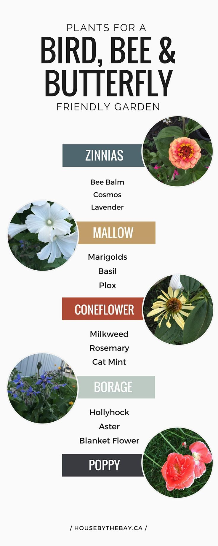 25 best ideas about Best flowers on Pinterest Flowers