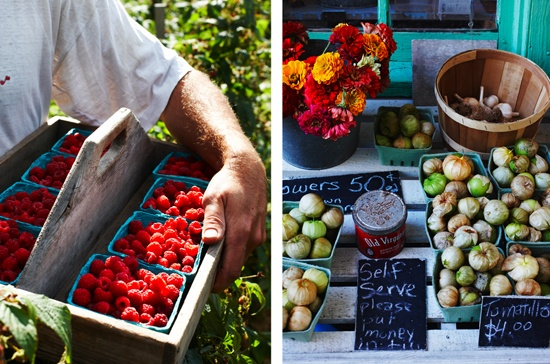 Images from Vicki Emlaw and Tim Noxon's Farm via John Cullen.