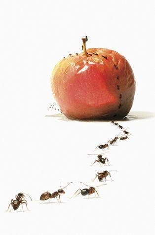 Come allontanare le formiche in modo naturale.