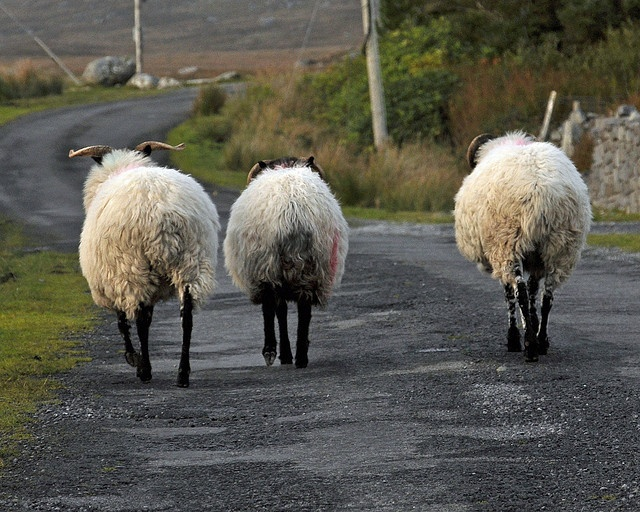 Oh ach, aye, we are really lost. I think we are at the Scottish Castle  and we should be at The Scottish Castle 2......Keep walking ye sheep, we've a far way te go....