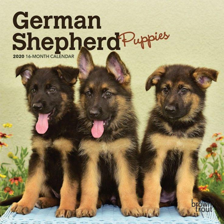 German Shepherd Puppies 2020 Mini Calendar Shepherd