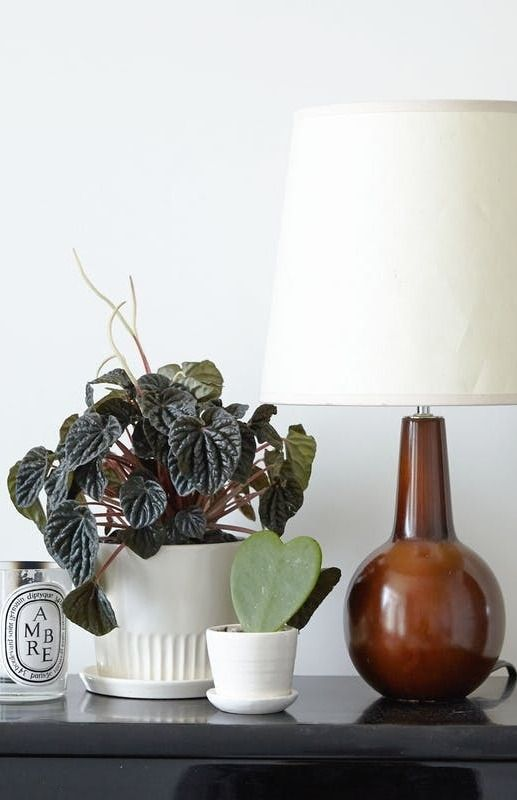 8 Houseplants that Can Survive Urban Apartments, Low Light and Under-Watering | Apartment Therapy