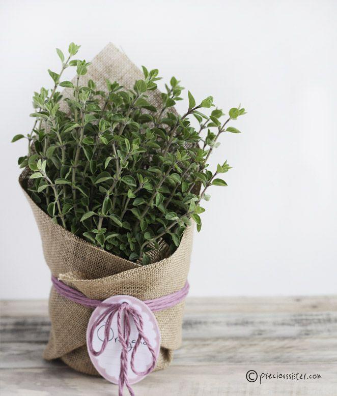 Para regalar plantas, envolver con tela de saco