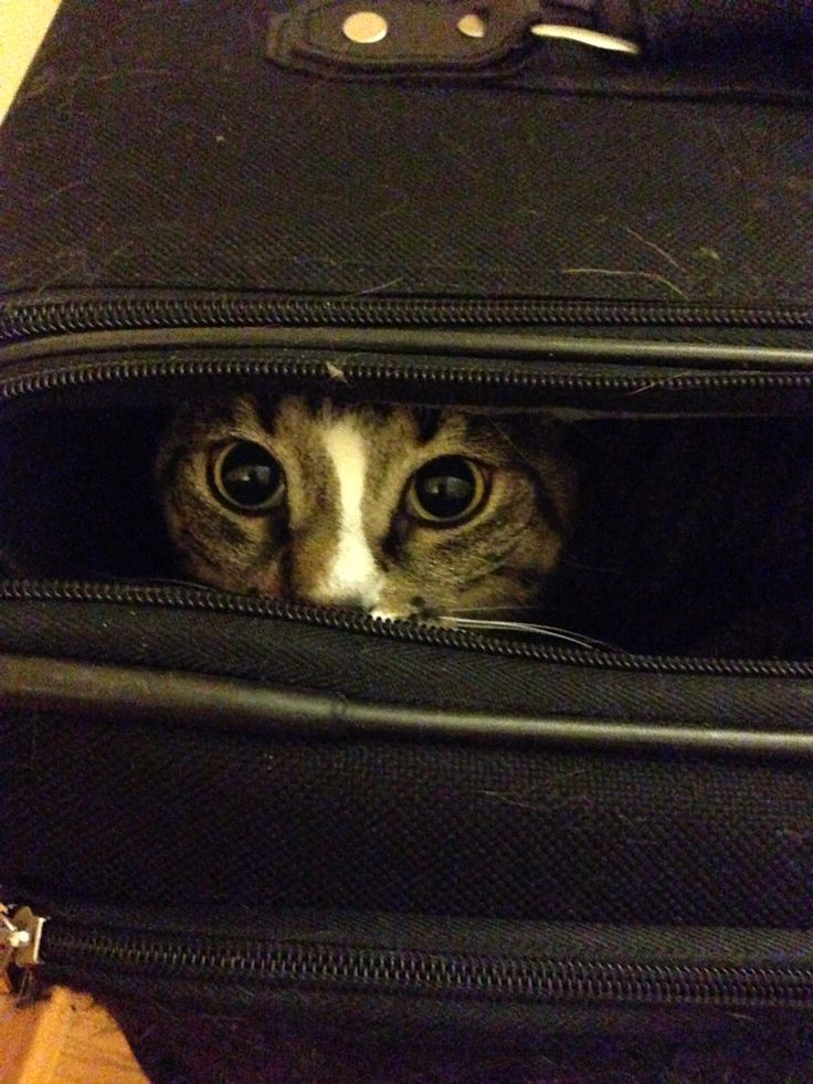 Isis in my luggage when I got back from the Dominican. Guess she wants to come with me next time.